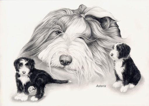portrait bearded collie bis zu 3 hunde gr e bis 22 cm bearded collie shop. Black Bedroom Furniture Sets. Home Design Ideas